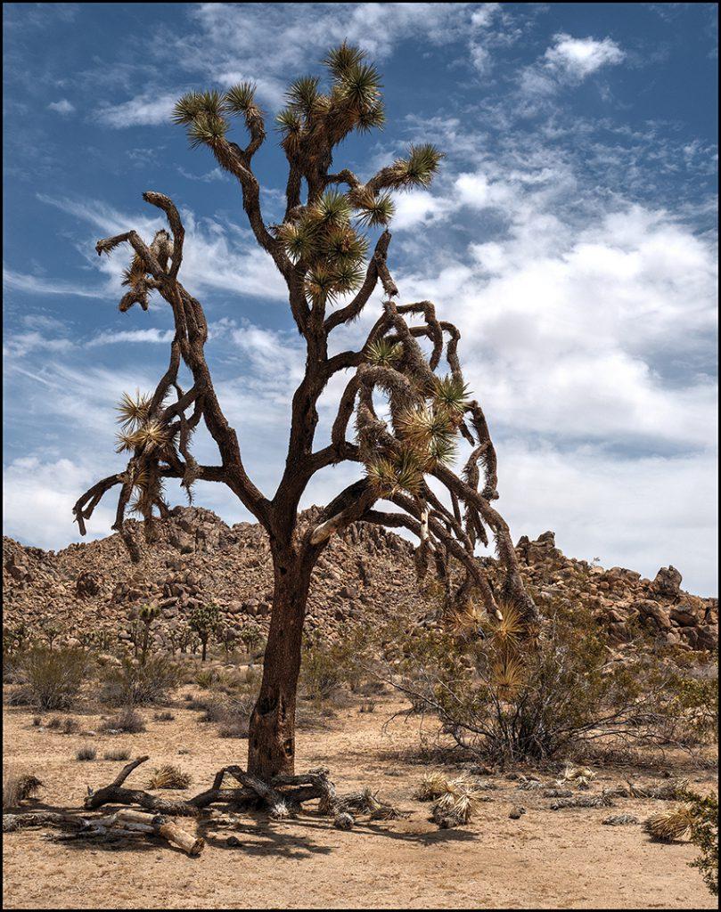 'digital' 1. plads Tage Christiansen 'Joshua tree'