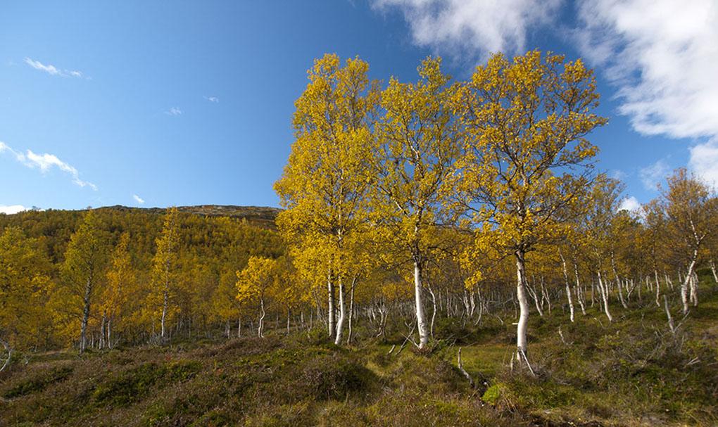 Uwe Hess Efterår-Norge-Ved-Aursjø-1
