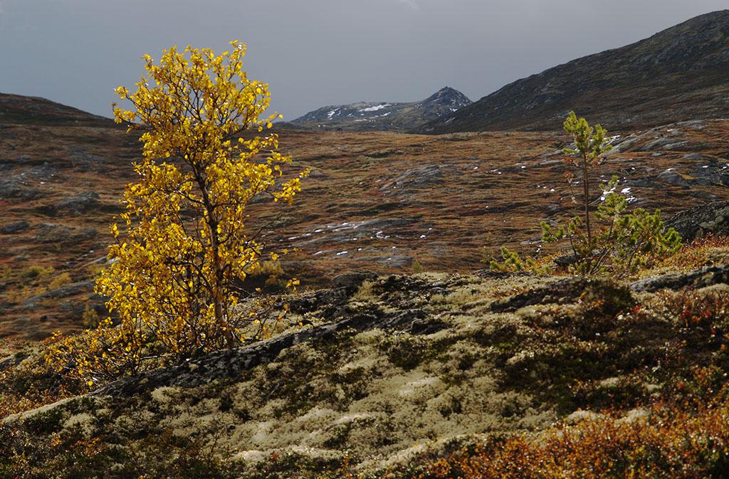Uwe Hess Efterår-Norge-Ved-Aursjø-2