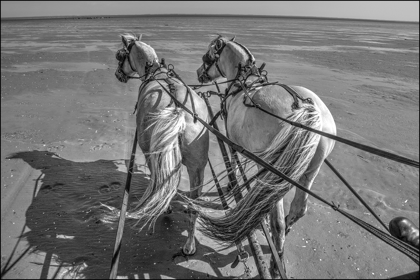Papir 3. plads Tage Christiansen Heste